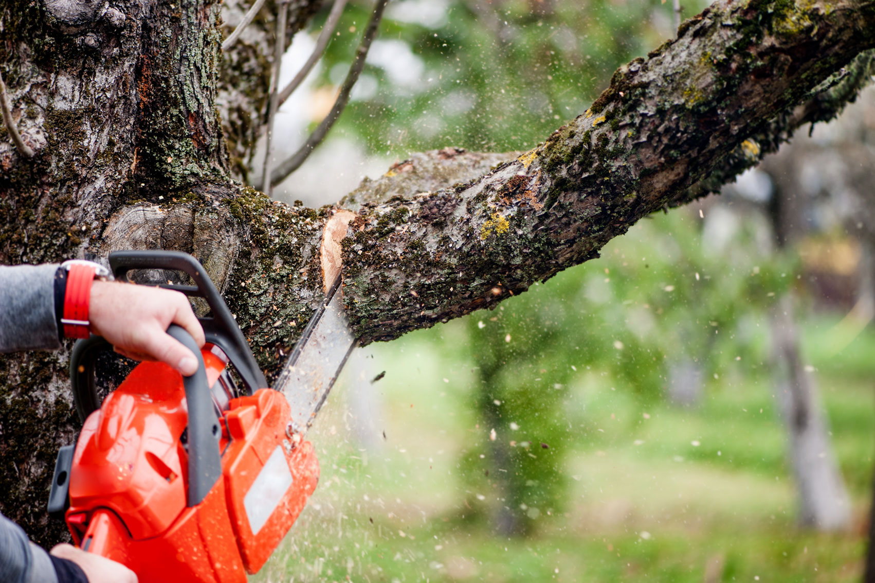 chainsaw, trees, lopping branch, pruning.